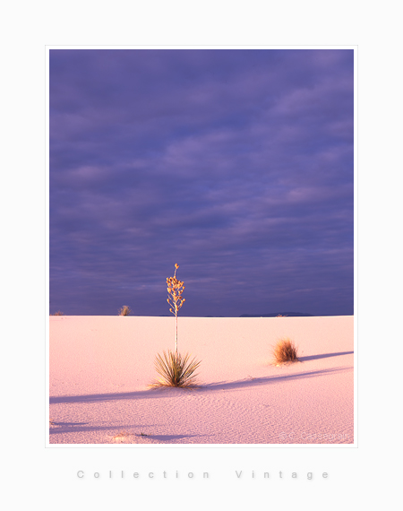 Drama, White Sands, New Mexico